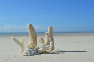 strand Kolfschoten